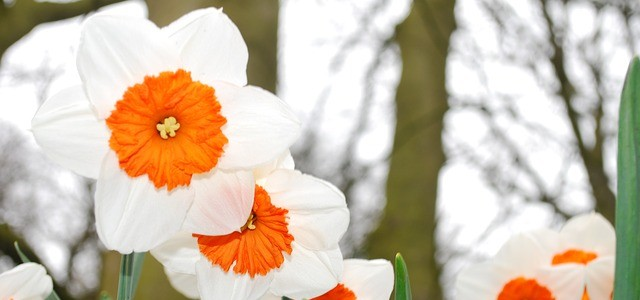 bloom-283020_640